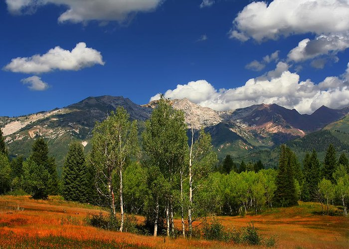 Blue Clean Clear Clouds Color Colorful Country Field Flora Freed Greeting Card featuring the photograph Rocky Mountains by Mark Smith