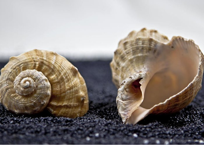 Contrast Greeting Card featuring the photograph Seashells On Black Sand by Joana Kruse