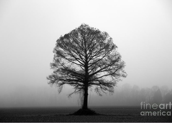 Tree Greeting Card featuring the photograph The Tree by Amanda Barcon