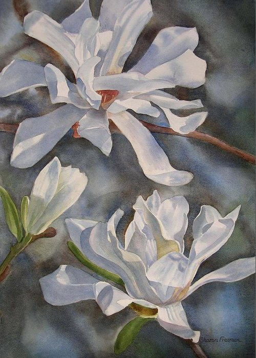 White Magnolia Greeting Card featuring the painting White Star Magnolia Blossoms by Sharon Freeman