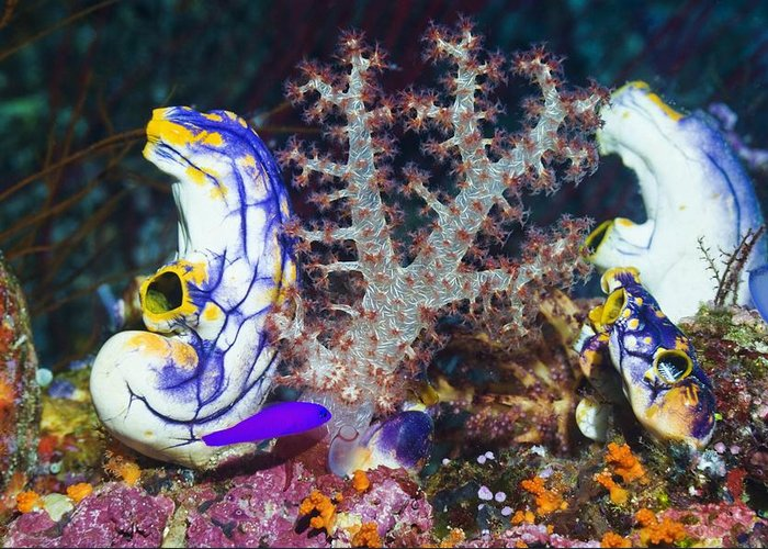 Animal Greeting Card featuring the photograph Sea Squirts by Georgette Douwma
