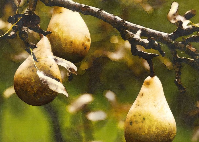 Pears Greeting Card featuring the painting Fall Harvest by Barb Pearson