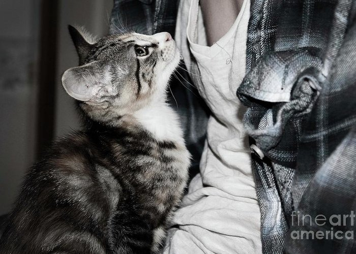 Kitten And Owner Greeting Card featuring the photograph Photography by Jayde Rowley