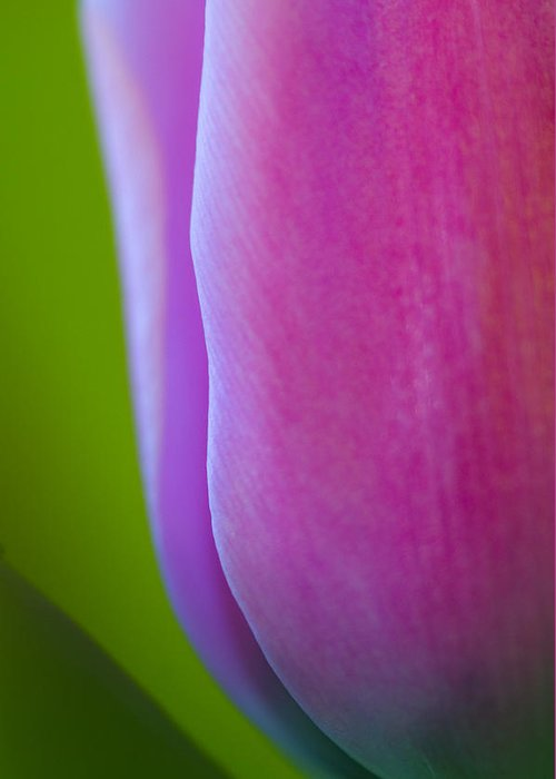 Flower Greeting Card featuring the photograph Tulip by Silke Magino