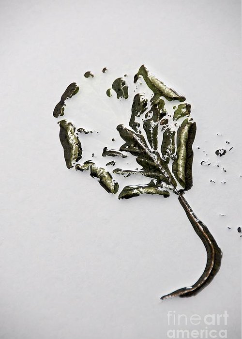 Botanical Greeting Card featuring the photograph Leaf by Bernard Jaubert