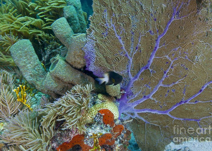 Sea Life Greeting Card featuring the photograph A Bi-color Damselfish Amongst The Coral by Terry Moore