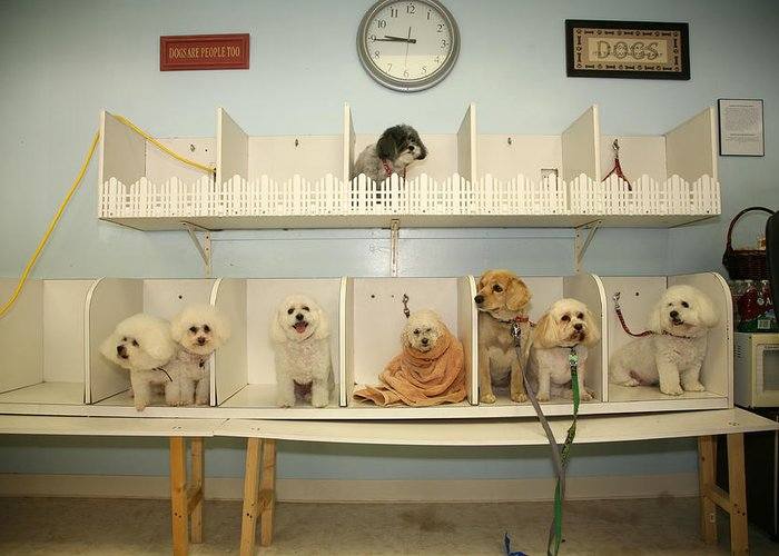 Animal Greeting Card featuring the photograph A Day At The Doggie Day Spa by Michael Ledray