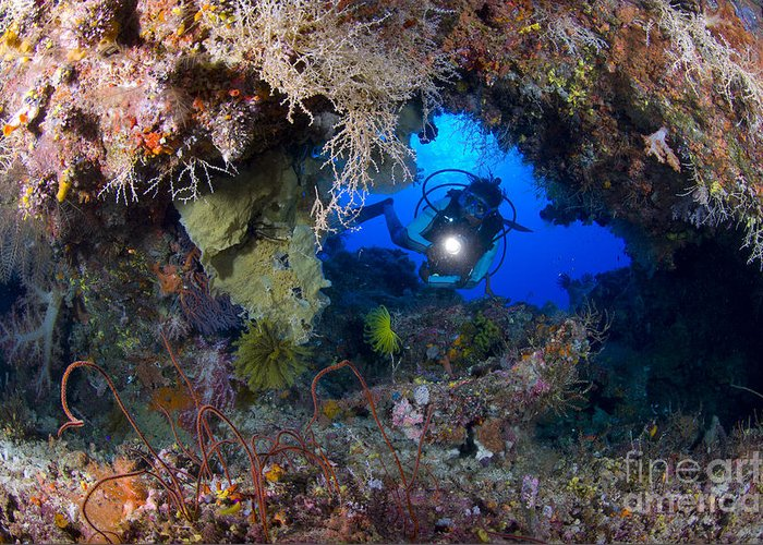 Arch Greeting Card featuring the photograph A Diver Peers Through A Coral Encrusted by Steve Jones