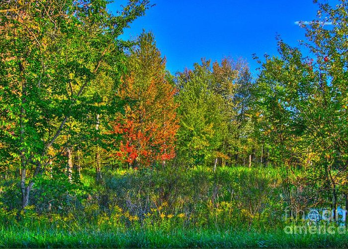 Related Tags: Greeting Card featuring the photograph A Hint Off Fall by Robert Pearson