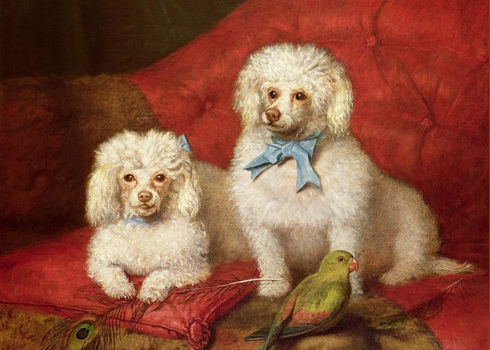 A Pair Of Poodles By English School (19th Century) Greeting Card featuring the painting A Pair Of Poodles by English School