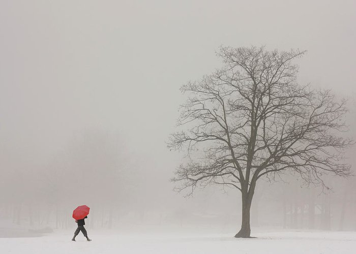 Snowy Winter Greeting Card featuring the photograph A Shortcut Through The Snow by Tom York Images