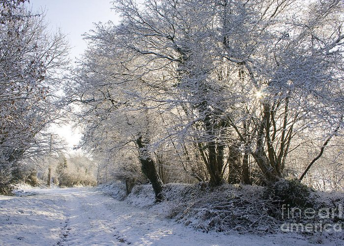 Winter Greeting Card featuring the photograph A Sparkling Winter Day by Sophie De Roumanie