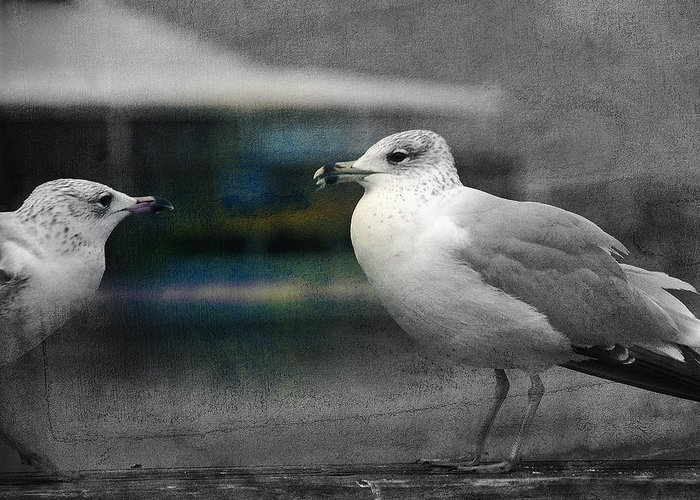 Two Seagulls Greeting Card featuring the photograph A Touch Of Blue by Susanne Van Hulst