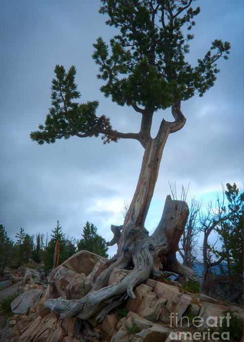 Tree Greeting Card featuring the photograph Against The Odds by Idaho Scenic Images Linda Lantzy