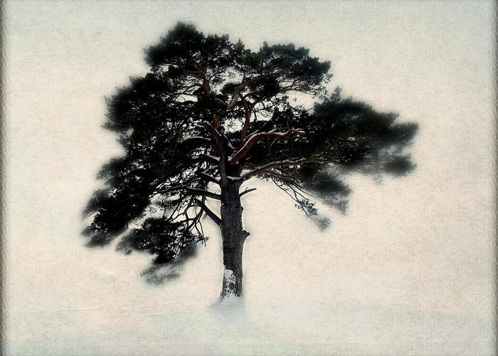 Tree Greeting Card featuring the photograph All In White by Julie Hamilton