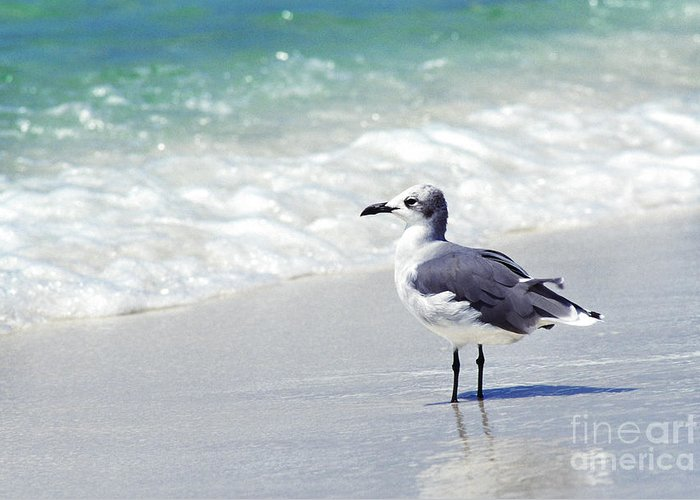 Herring Gull Greeting Card featuring the photograph Alone On The Beach by Thomas R Fletcher