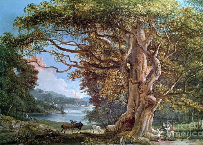 Ancient Greeting Card featuring the painting An Ancient Beech Tree by Paul Sandby