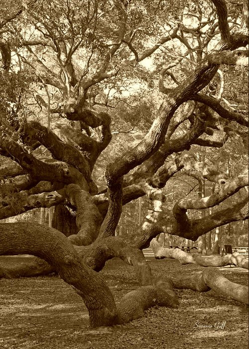 Sepia Greeting Card featuring the photograph Angel Oak In Sepia by Suzanne Gaff