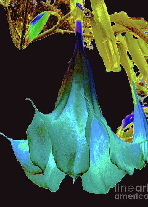 Flower Greeting Card featuring the photograph Angel's Trumpet Flower by Merton Allen