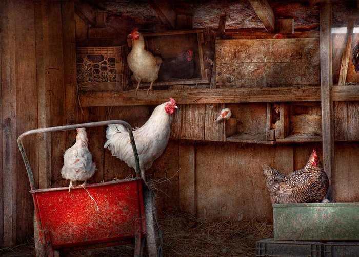 Chicken Greeting Card featuring the photograph Animal - Chicken - The Duck Is A Spy by Mike Savad