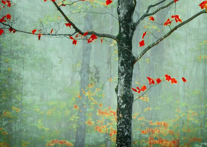 Tree Greeting Card featuring the photograph Another Day Another Fairytale by Katya Horner