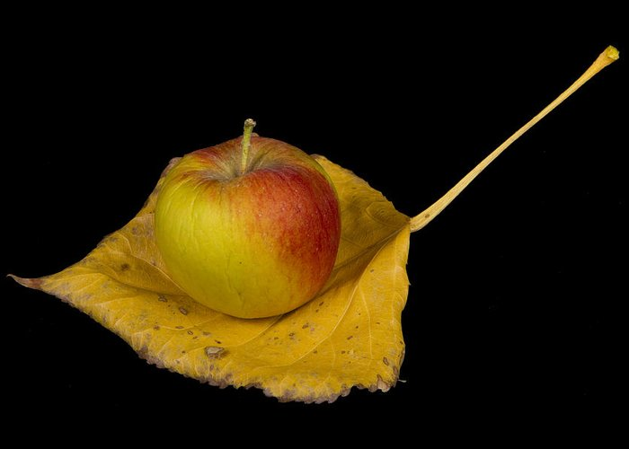 Apple Greeting Card featuring the photograph Apple Harvest Autumn Leaf by James BO Insogna