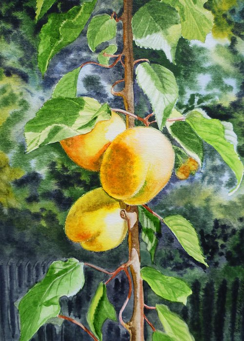 Apricot Greeting Card featuring the painting Apricots In The Garden by Irina Sztukowski