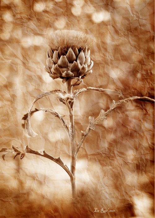 Flower Greeting Card featuring the photograph Artichoke Bloom by La Rae Roberts