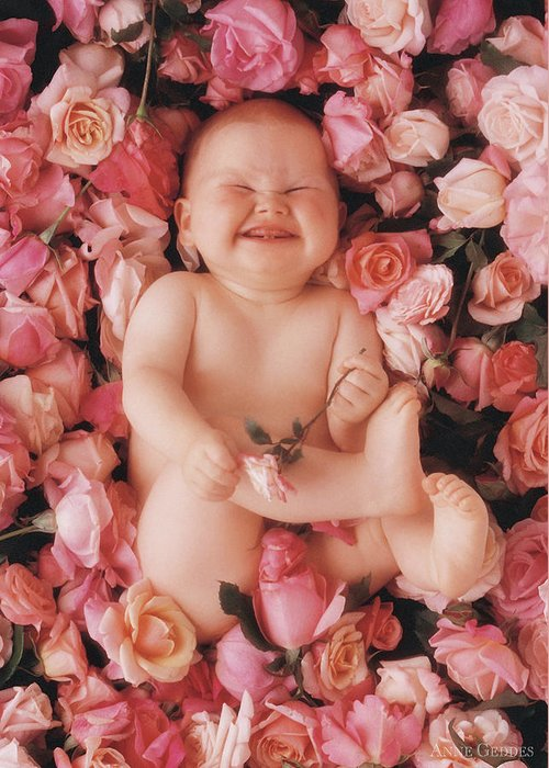 Roses Greeting Card featuring the photograph Cheesecake by Anne Geddes