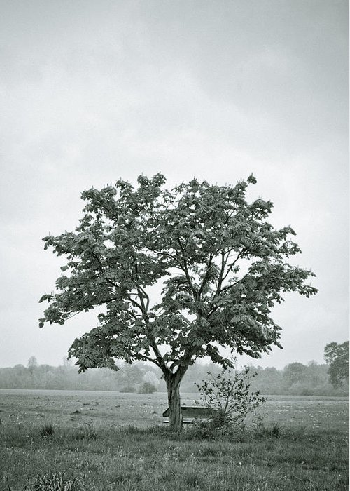 Tree Greeting Card featuring the photograph August In England by Andy Smy