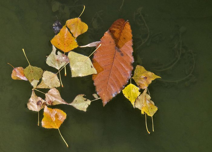 Leaves Greeting Card featuring the photograph Autumn 1 by Kenton Smith