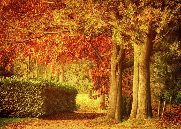 Autumn Greeting Card featuring the photograph Autumn Colors by Wim Lanclus