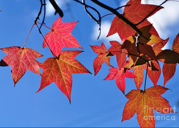 Photography Greeting Card featuring the photograph Autumn In The Sky by Kaye Menner