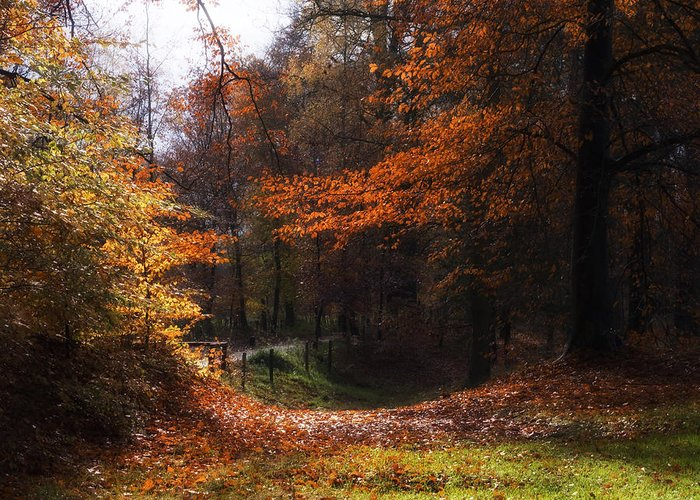 Nature Greeting Card featuring the photograph Autumn Landscape by Artecco Fine Art Photography