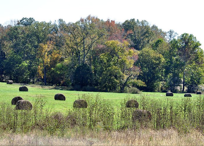 Landscapes Greeting Card featuring the photograph Autumn Pastures by Jan Amiss Photography