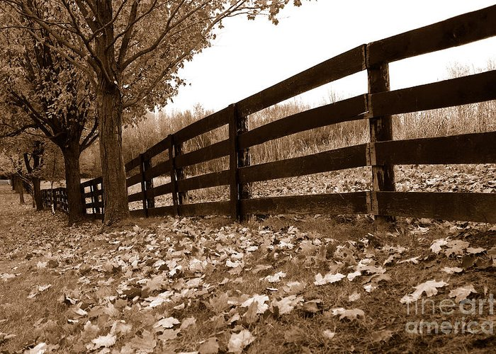 Autumn Greeting Card featuring the photograph Autumn Perspective by Joe Ng
