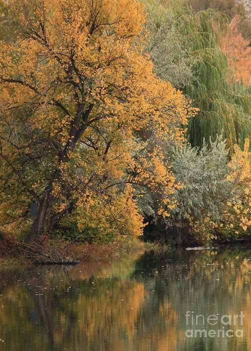 Landscape Greeting Card featuring the photograph Autumn Riverbank by Carol Groenen