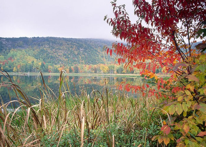 Acadia Greeting Card featuring the photograph Autumn Scenic Acadia National Park Maine by George Oze