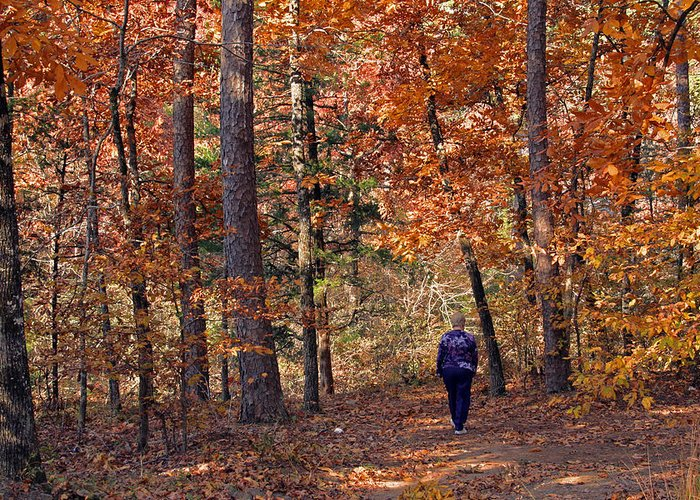 Fall Greeting Card featuring the photograph Autumn Stroll by Gayle Johnson