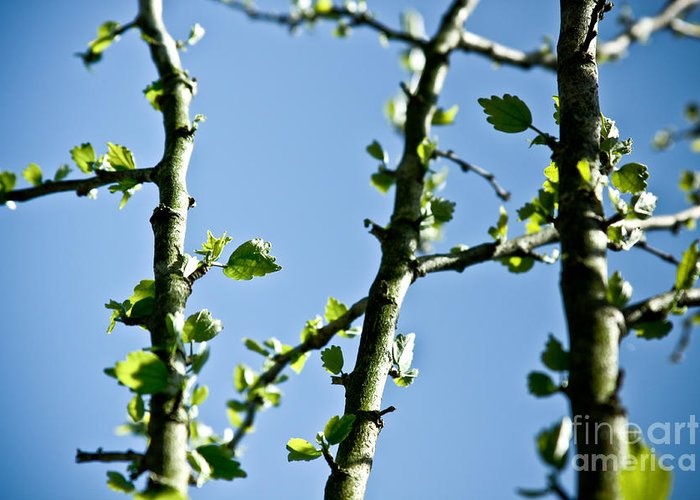 ryankellyphotography@gmail.com Greeting Card featuring the photograph Baby Spring Tree Leaves 01 by Ryan Kelly