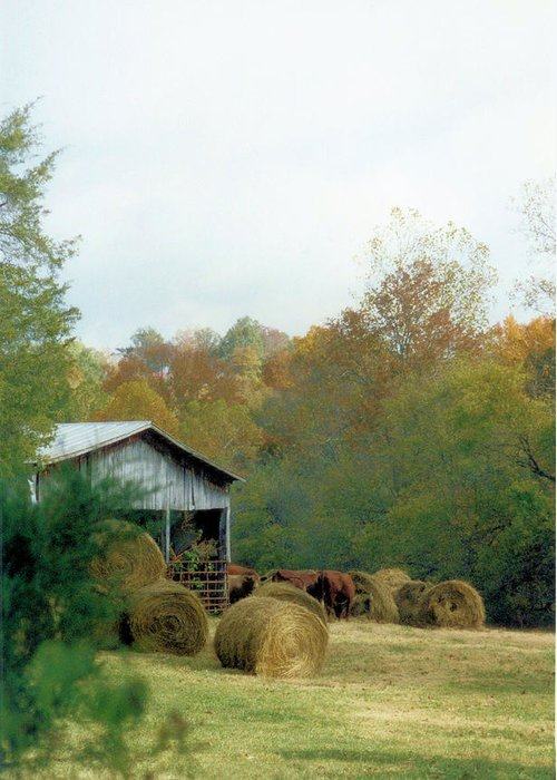 Animals Greeting Card featuring the photograph Back At The Barn by Jan Amiss Photography