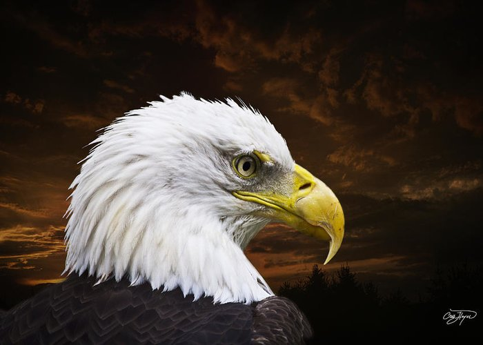 Eagle Greeting Card featuring the photograph Bald Eagle - Freedom And Hope - Artist Cris Hayes by Cris Hayes