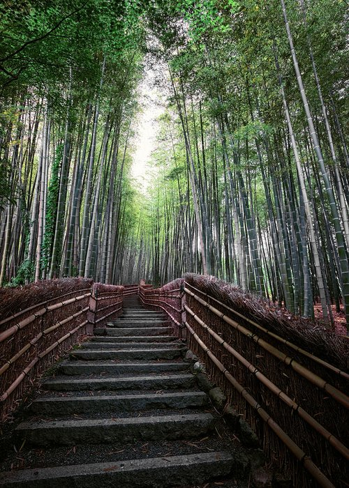 Bamboo Greeting Card featuring the photograph Bamboo Forest Of Japan by Daniel Hagerman