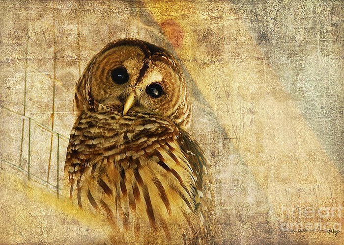 Owl Greeting Card featuring the photograph Barred Owl by Lois Bryan