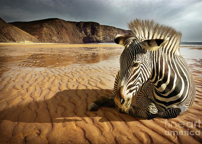 Africa Greeting Card featuring the photograph Beach Zebra by Carlos Caetano