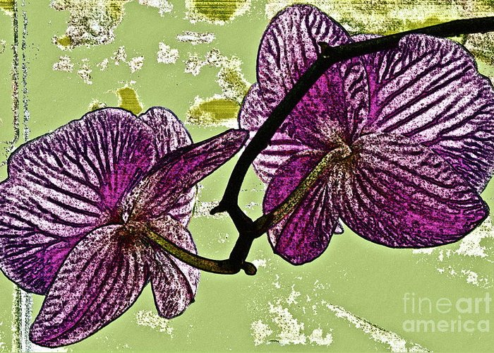 Orchid Greeting Card featuring the photograph Behind The Orchids by Gwyn Newcombe