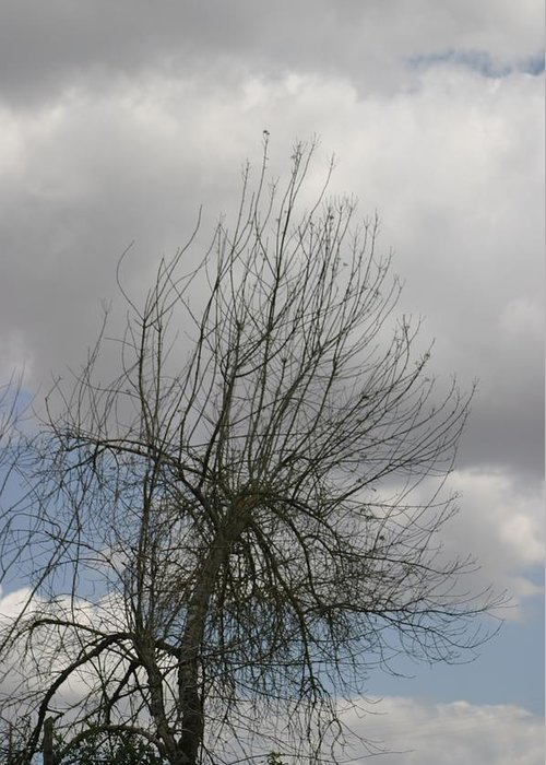 Tree Greeting Card featuring the photograph Being With Dying by Dagmar Ceki