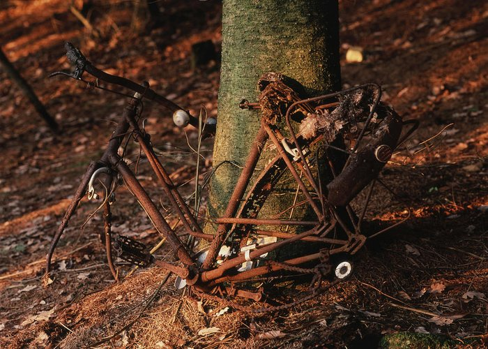 Danger Greeting Card featuring the photograph Bicycle Abandoned In A Forest by Bernard Jaubert