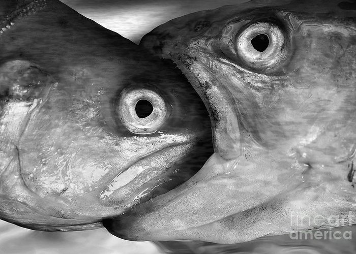 Fish Greeting Card featuring the photograph Big Fish Eat Small Fish by Michal Boubin