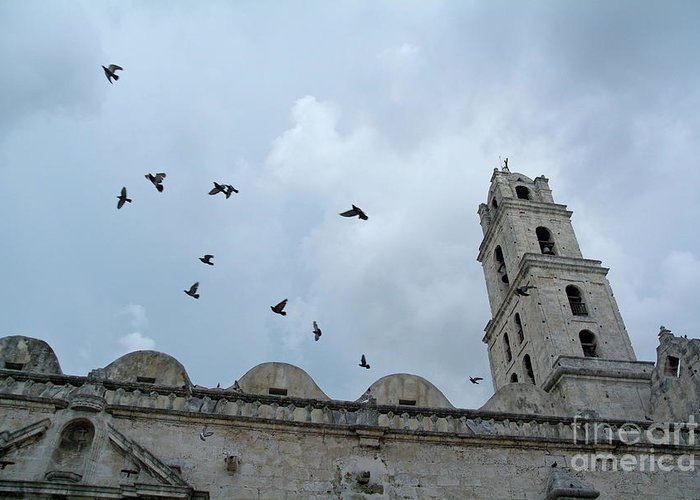 Animal Greeting Card featuring the photograph Birds Flying Above The Basilica And The Monastery Of Saint Francis Of Assisi by Sami Sarkis